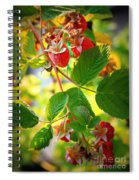 Backyard Garden Series - Sunlight On Raspberries Spiral Notebook