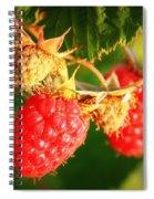 Backyard Garden Series - Two Ripe Raspberries Spiral Notebook
