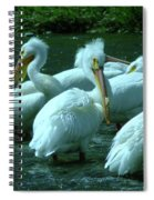 Bad Hair Day At The Pelican Social Gathering  Spiral Notebook