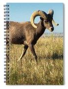 Badlands Ram Spiral Notebook