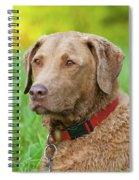 Bailee 1149 Spiral Notebook