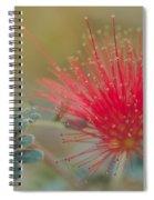 Baja Fairy Duster Spiral Notebook