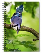 Balanced Blue Jay Spiral Notebook