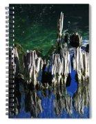 Bald Cypress Stump Spiral Notebook