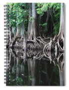 Bald Cypress Trees Along The Withlacoochee River Spiral Notebook