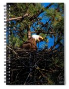 Bald Eagle In The Nest Spiral Notebook