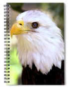 Bald Eagle 1 Spiral Notebook