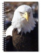 Bald Eagle 1 Spiral Notebook