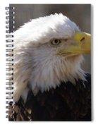 Bald Eagle 3 Spiral Notebook