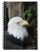 Bald Eagle #8 Spiral Notebook