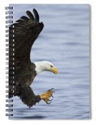 Bald Eagle At Ready Spiral Notebook