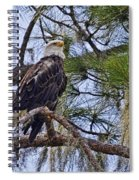 Bald Eagle By H H Photography Of Florida Spiral Notebook