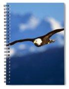 Bald Eagle Haliaeetus Leucocephalus Spiral Notebook