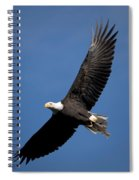 Bald Eagle I Spiral Notebook