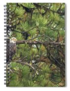 Bald Eagle In A Pine Tree, No. 4 Spiral Notebook