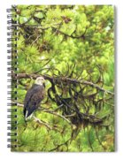 Bald Eagle In A Pine Tree, No. 5 Spiral Notebook