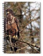Bald Eagle Juvenile 2 Spiral Notebook