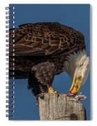 Bald Eagle Lunch Spiral Notebook
