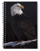 Bald Eagle Majestic Spiral Notebook