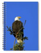 Bald Eagle On Blue Spiral Notebook