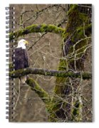 Bald Eagle On Mossy Branch Spiral Notebook