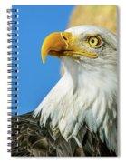 Bald Eagle Profile 4 Spiral Notebook