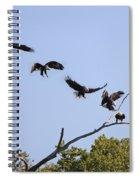 Bald Eagle Sequence  1277 Spiral Notebook