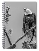 Bald Eagle Warning In Black And White Spiral Notebook