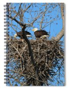 Bald Eagles Working On The Nest   3682 Spiral Notebook