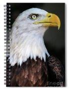 Baldeagle-6903 Spiral Notebook