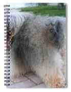 ball of fur Havanese dog Spiral Notebook