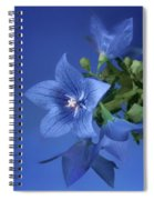 Balloon Flowers - Blooms And Buds Spiral Notebook