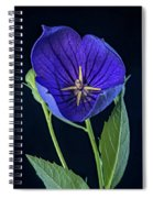 Baloon Flower In Early Morning Spiral Notebook