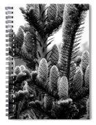 Balsam Fir Buds Bw Spiral Notebook