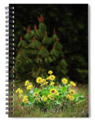 Balsamroot And Evergreen Spiral Notebook