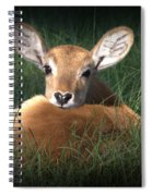 Bambi Spiral Notebook