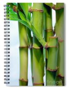 Bamboo And Sky Spiral Notebook