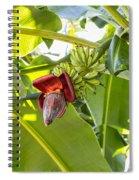 Banana Bunch Spiral Notebook