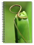 Banana Palm Frond Ready To Unfurl Spiral Notebook
