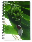 Banana Plant Kew London England Spiral Notebook