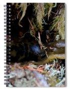 Banana Slug Eleven Spiral Notebook
