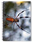 Banana Spider   3 Spiral Notebook