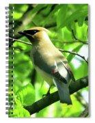 Bandit Bird Spiral Notebook
