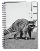 Bandit In Broad Daylight Spiral Notebook