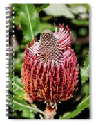 Banksia In Red Spiral Notebook