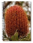 Banksia Serrata 2 Spiral Notebook