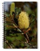 Banksia Syd01 Spiral Notebook