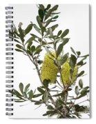 Banksia Syd02 Spiral Notebook