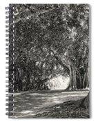 Banyan Street 3 Spiral Notebook