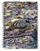 Bar-backed Partridge 2 Spiral Notebook